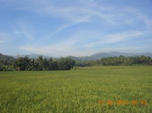 Karunia di Bumi Nusantara ini bisa menjadikan kita swa sembada pangan